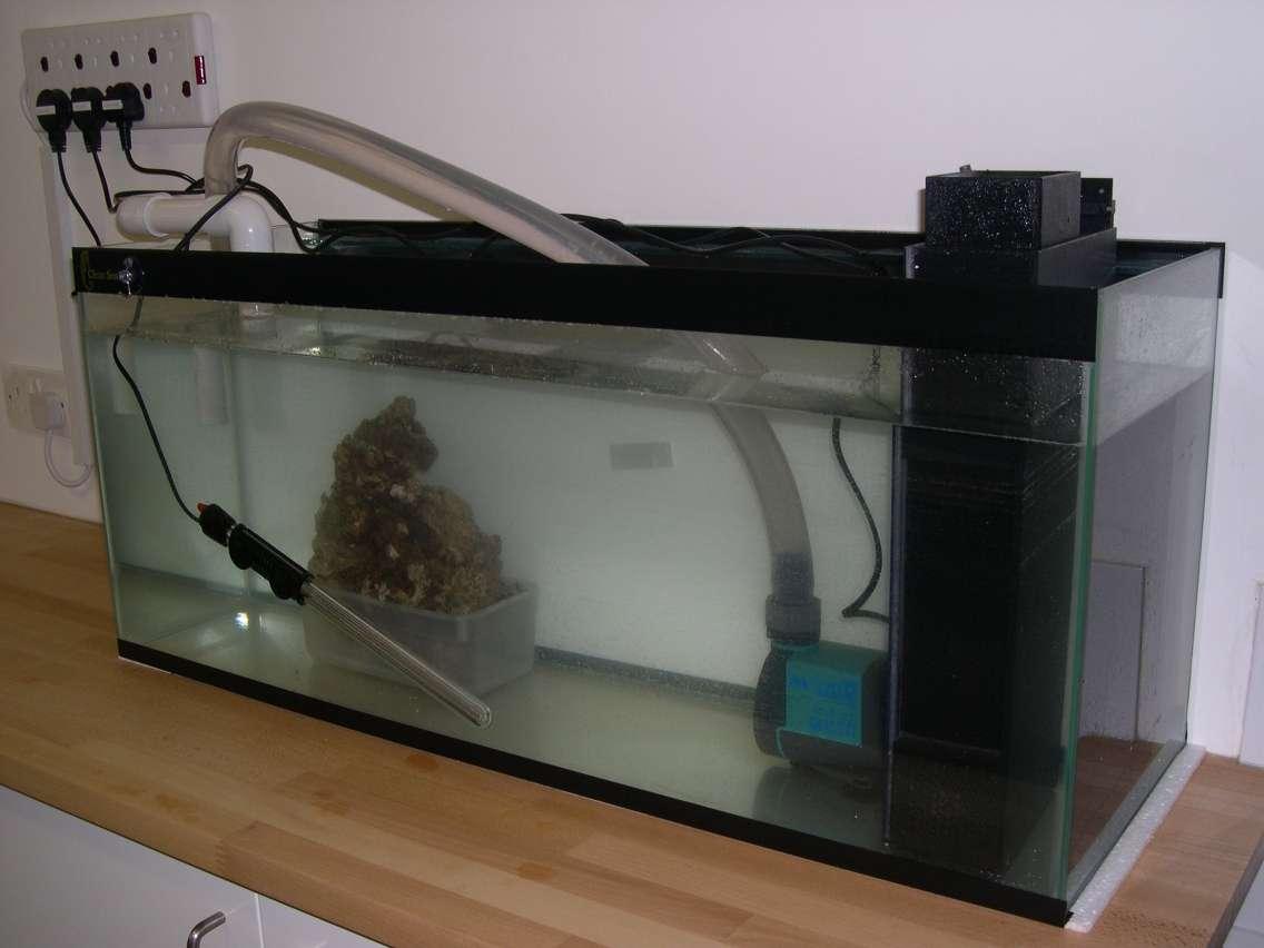 Fish for Fish tank sump pump