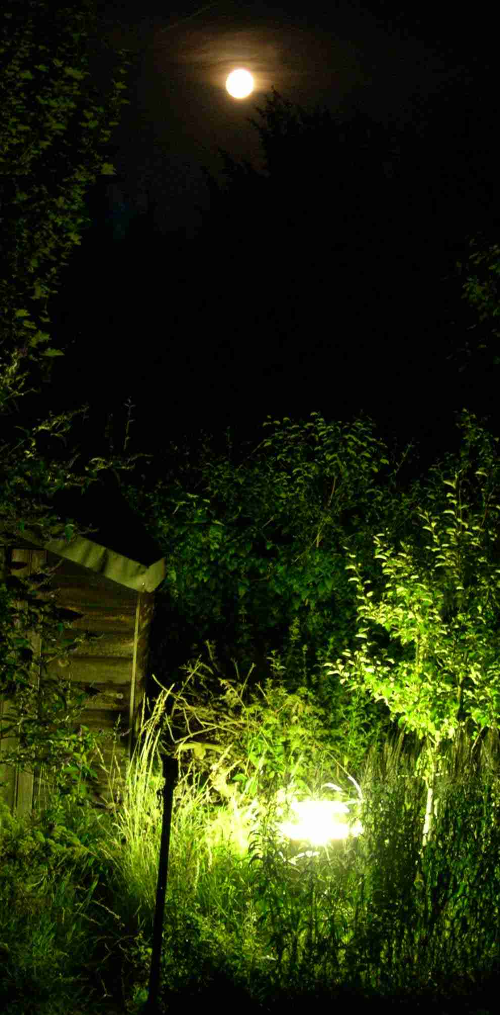 Moth trap at                 the bottom of our garden at full moon