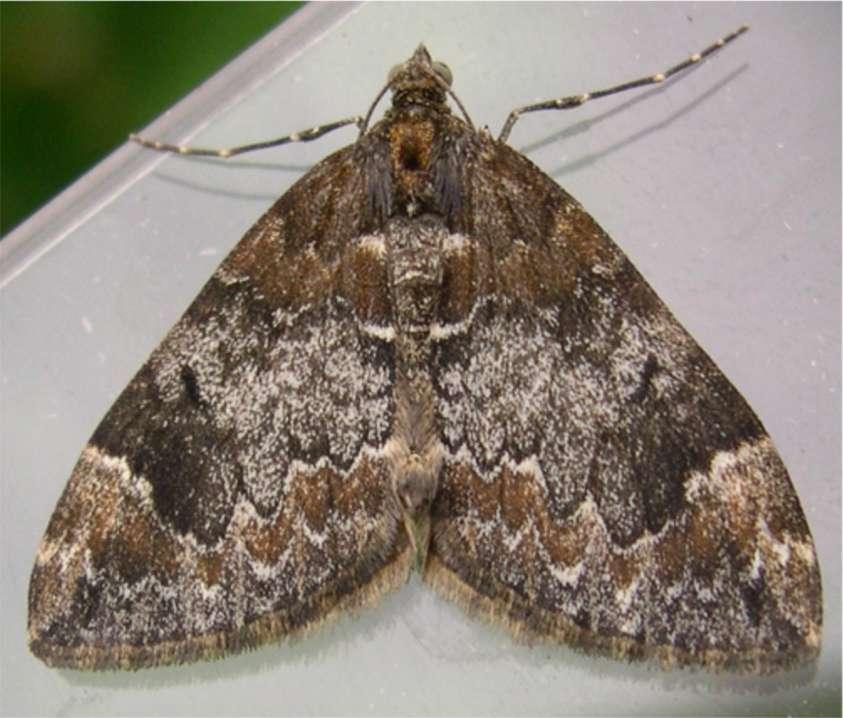 Moth Cos In Carpet Carpet Vidalondon