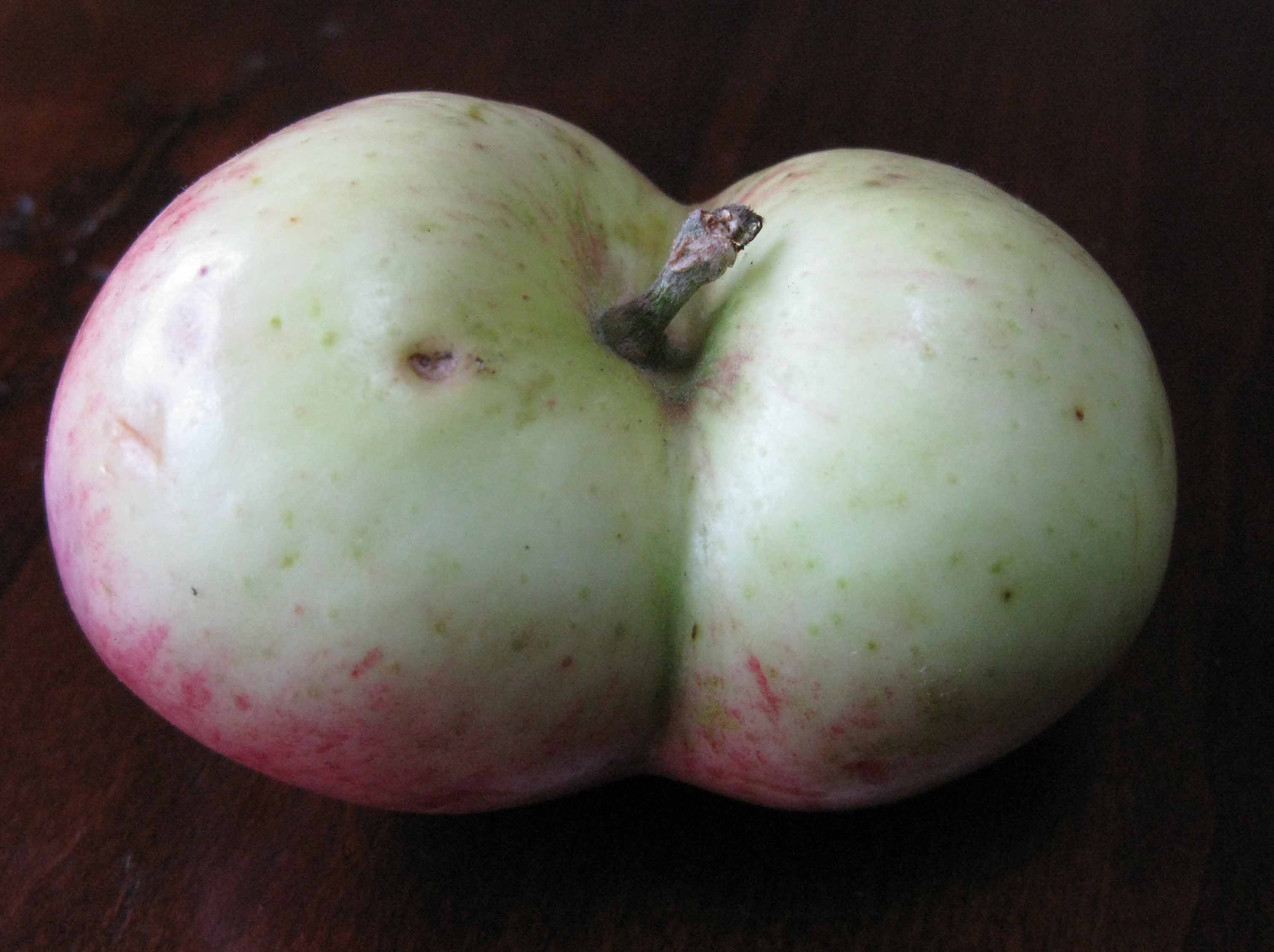 apple twins porn pictures